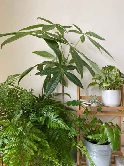 lush green potted houseplants in light room