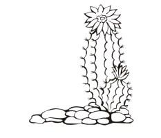 20 Besten Ausmalbilder Kaktus   Beste Wohnkultur ...