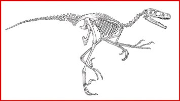 Dino Skelett Malvorlage   Kinder Ausmalbilder