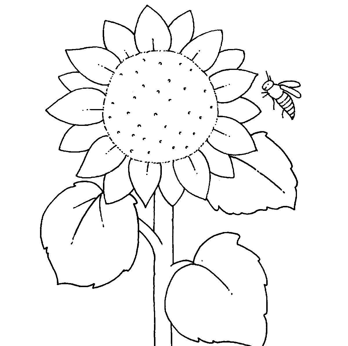 Top 20 sonnenblume Malvorlagen Kostenlos - Beste