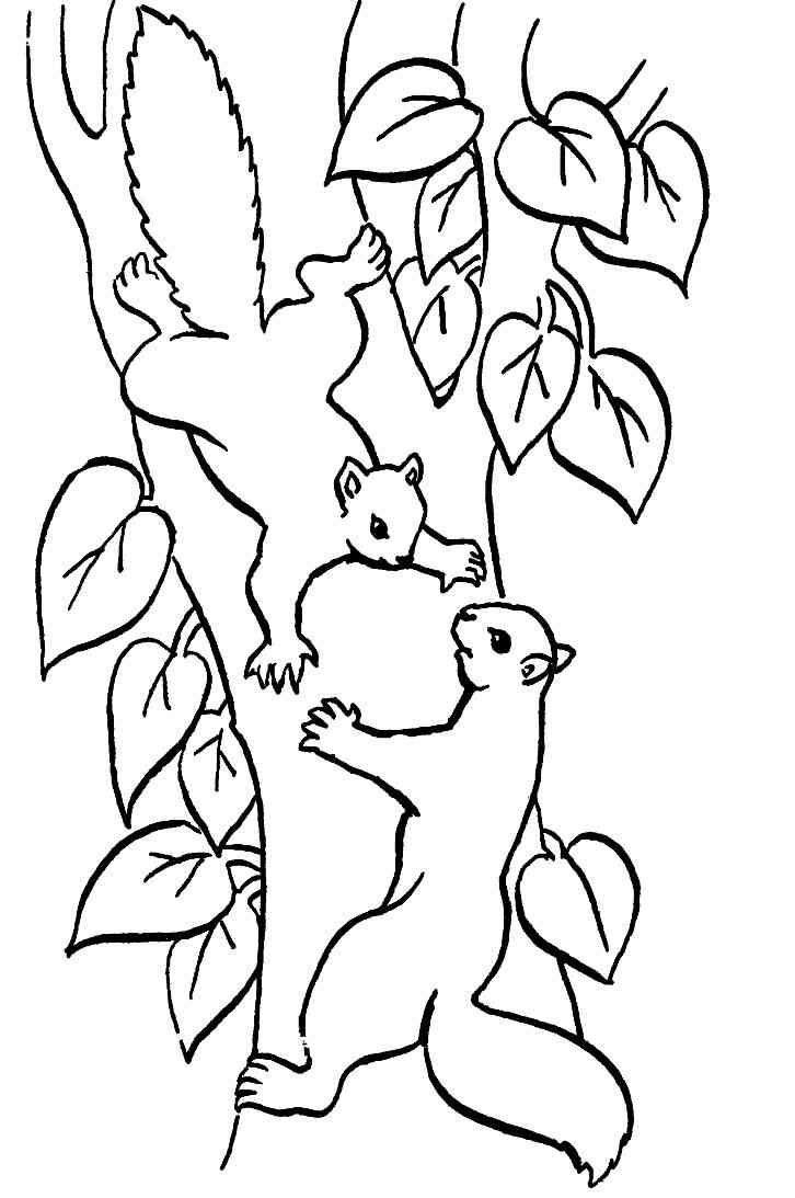 20 Besten Ideen Ausmalbilder Herbst Eichhörnchen - Beste