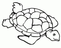 Die 20 Besten Ideen Für Malvorlagen Schildkröte   Beste ...