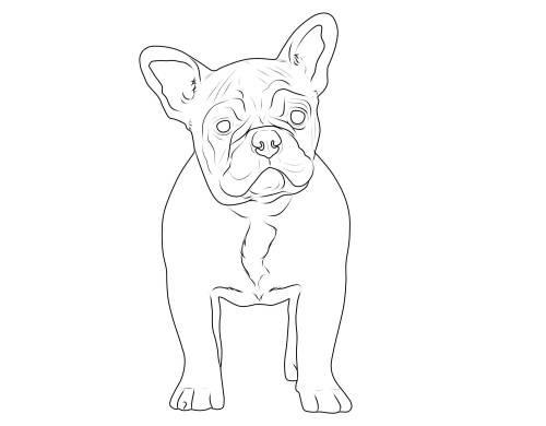 Die Besten Ideen Für Ausmalbilder Bulldog - Beste
