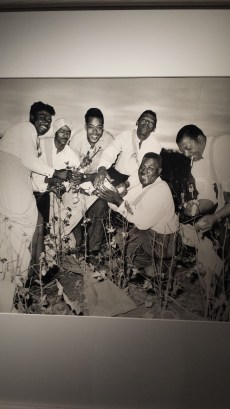 Howlin' Wolf & The Band picking cotton