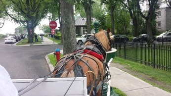 Horse stops for a drink during our carriage ride