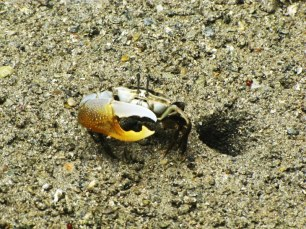 crabe sur la baie de phang nga