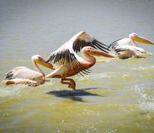Oiseau de Djoudj