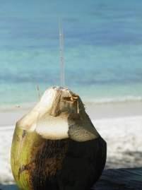 noix de coco sur la plage de saona island