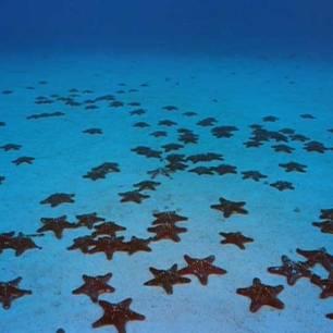 Etoile de mer à Saona Island