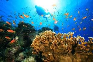 plongee en republique dominicaine à punta cana