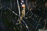 araignée en thailande lors d un trek a chiang mai