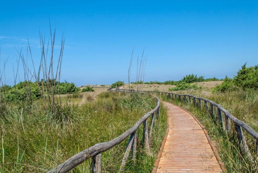 Sand dunes Lecciona Versilia tuscany