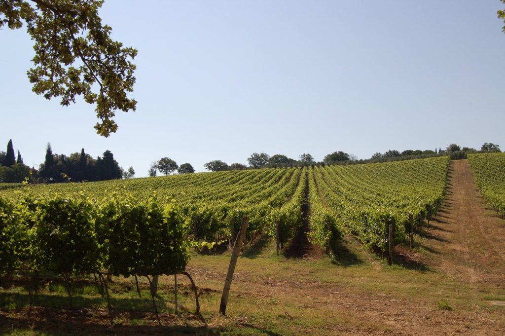 Scansano in maremma wine tours in Tuscany