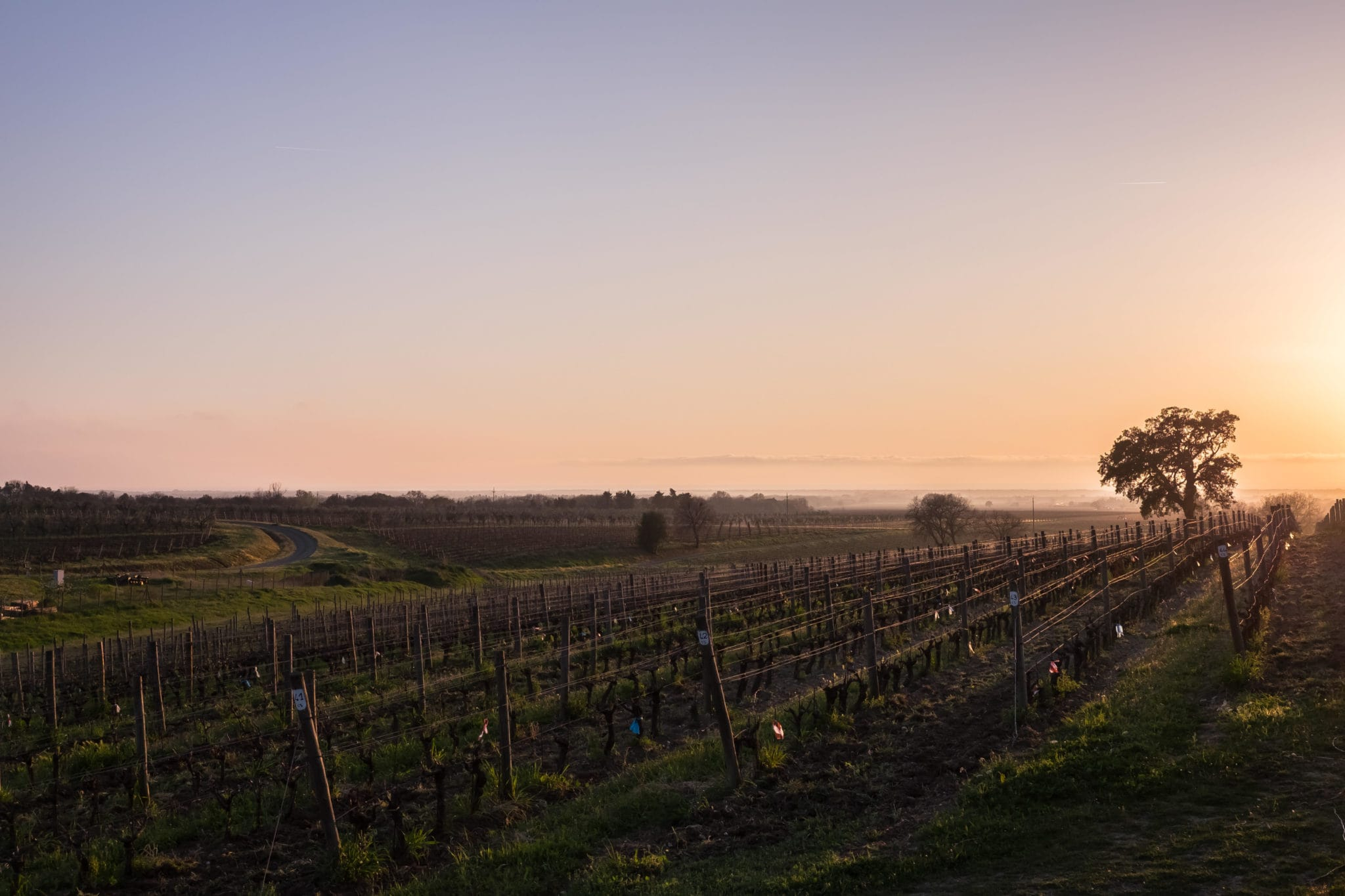 Sunset at the vineyard in Bolgheri Tuscany