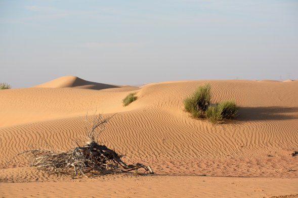 Loving those sand ripples in this stark landscape..