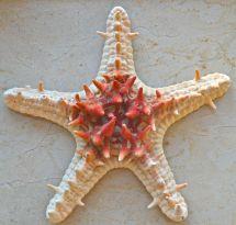 Sun-dried from Sri Lanka....
