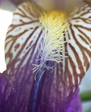 Close up to my Iris...