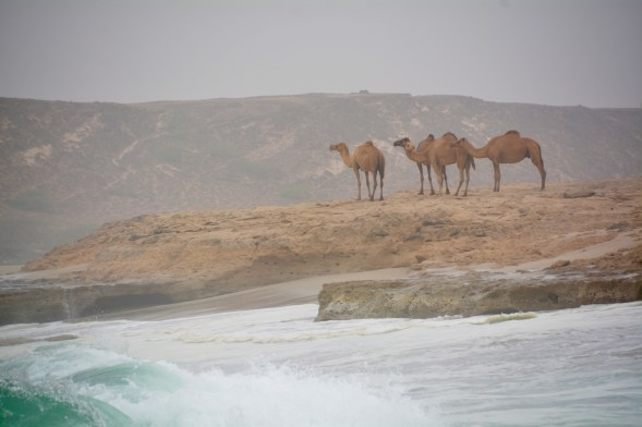 And sentinels on the beach watching the raging monsoon seas...