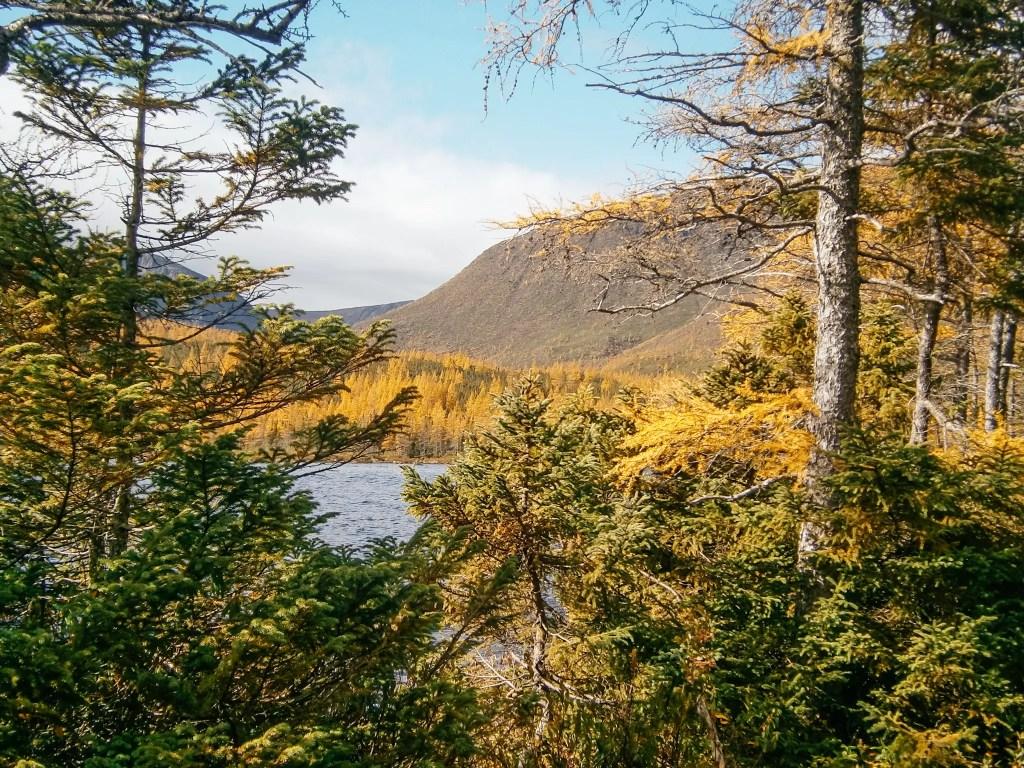 parc national de la gaspésie automne