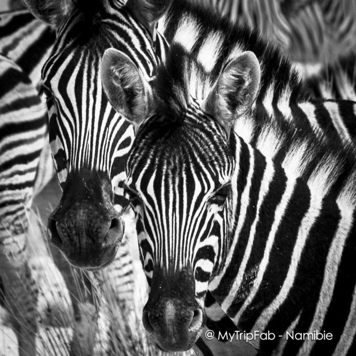 Etosha National Parc