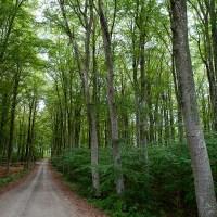 Bokskogar i Norrland och på nordligare breddgrader
