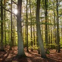 6 månader med lövade träd i Skåne