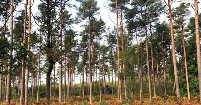 Gorgeous trees at Broadwater Warren