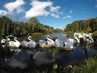 lago-negro-ducks