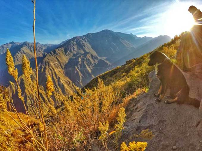 dog-in-canyon
