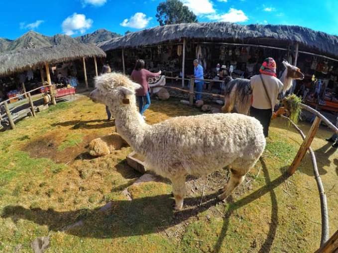 corao-llama