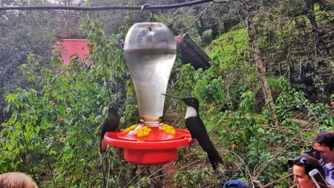 casa-de-los-colibris