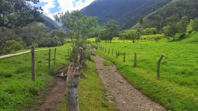 cocora-valley-hike