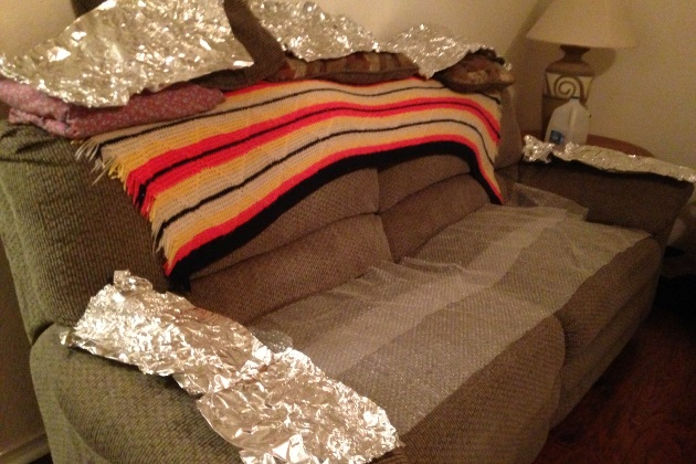 Aluminum Foil And Bubble Wrap Can Keep A Dog Off The Furniture