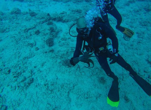 Diving in with Marine turned scuba diver Nicholas Foster
