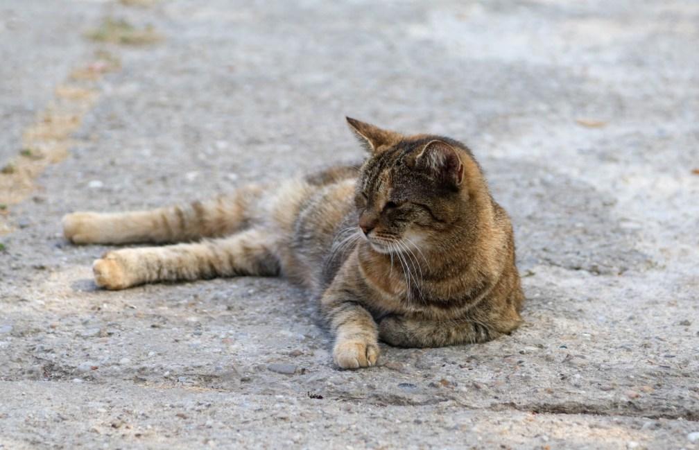 cat in Village Museum