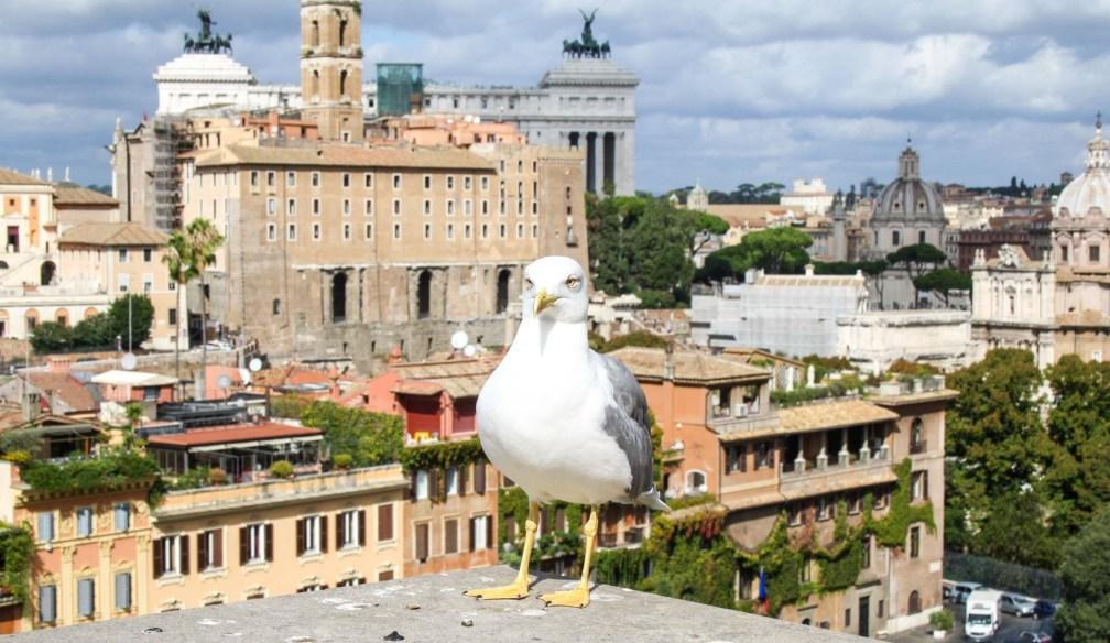Rome city view