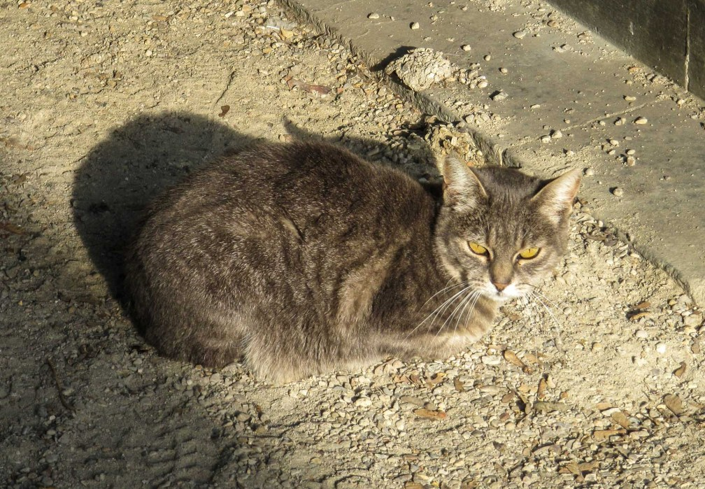 Montmartre Cemetery cat