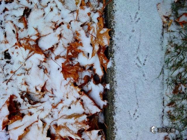 DSC094622013 first snow