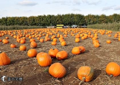 四季節慶 深度體驗秋天滋味:走玉米迷宮、採蘋果、逛南瓜田