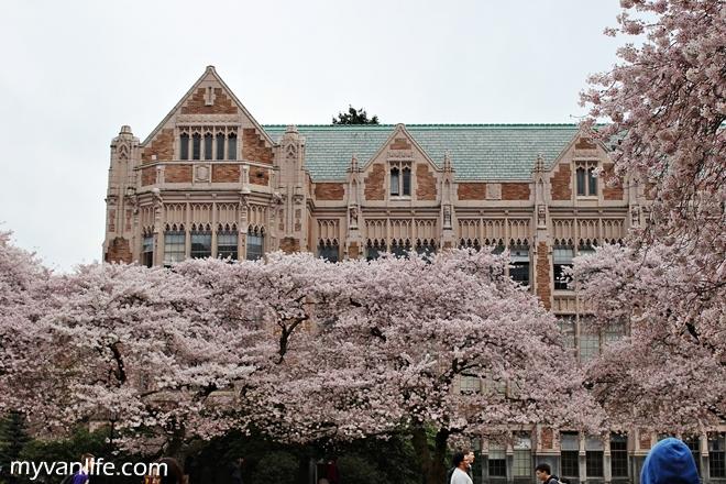 美國西雅圖活盛頓大學賞櫻