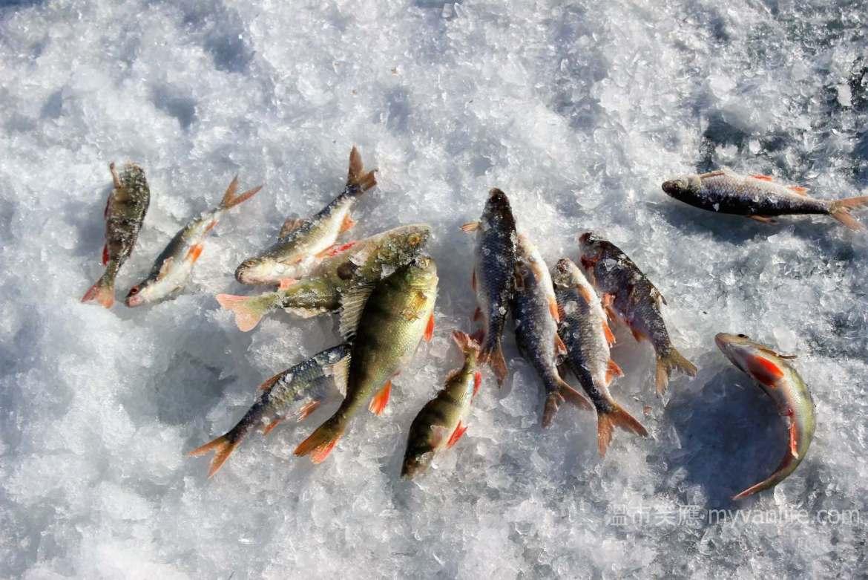{貝加爾湖旅遊} 冰上釣魚