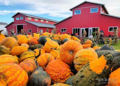 溫哥華節慶|秋天了,天下何處無南瓜?