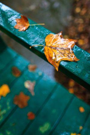 Fallen leaves rest on balustrade and bridge during rain, Grosvenor Park.