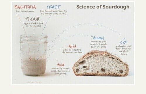 sourdough bread homeschool science project
