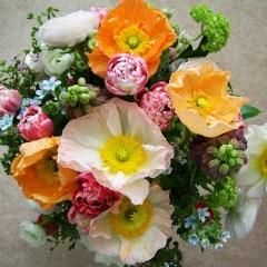 7 Best Flowers of Winter