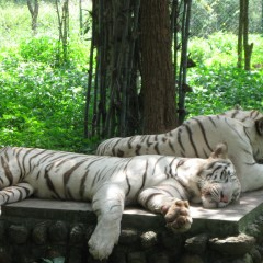 Best National Parks And Sanctuaries In India