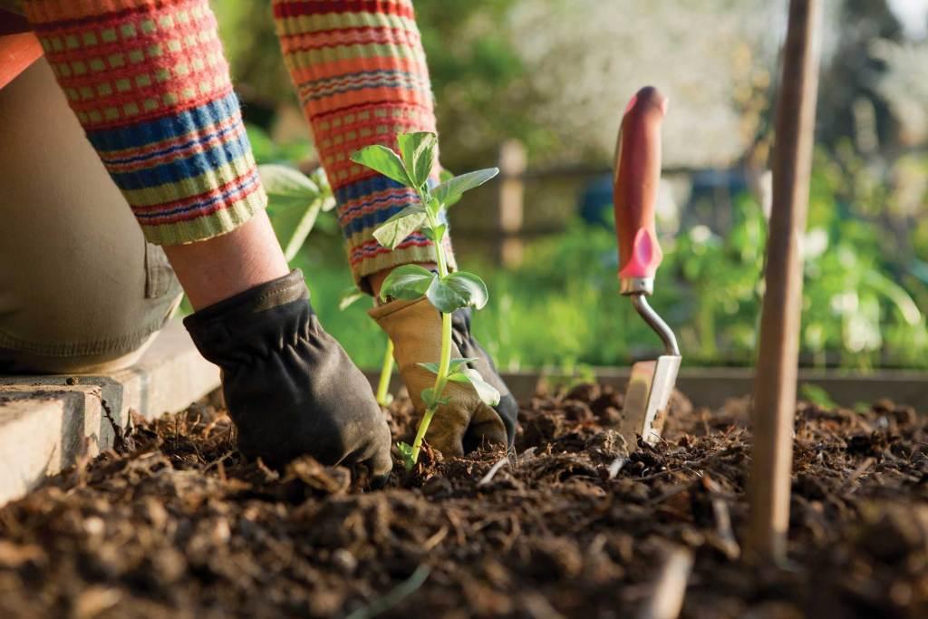 garden fertilizers, Liquid cannabis, Liquid Fertilizers, Soil fertilizers