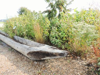 An old canoe hollowed out of the trunk of a single tree.