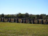 John Ray's cornfield