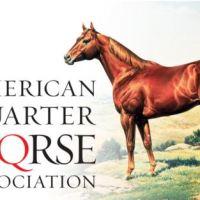 Breeders: American Quarter Horse